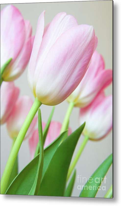 Flower Metal Print featuring the photograph Pink Tulip Flowers by Julia Hiebaum
