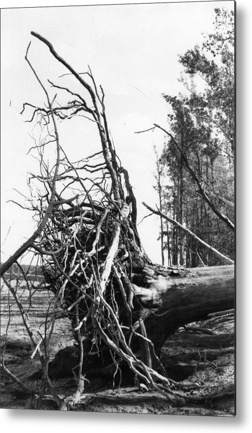 Storm Metal Print featuring the photograph Roots by Steven Crown