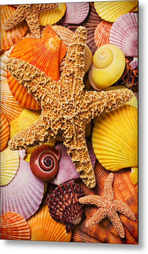 Starfish Metal Print featuring the photograph Starfish And Seashells by Garry Gay