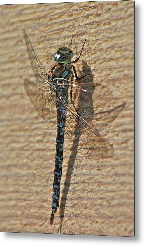 Dragon Fly Metal Print featuring the photograph The Dragon by Rick Monyahan