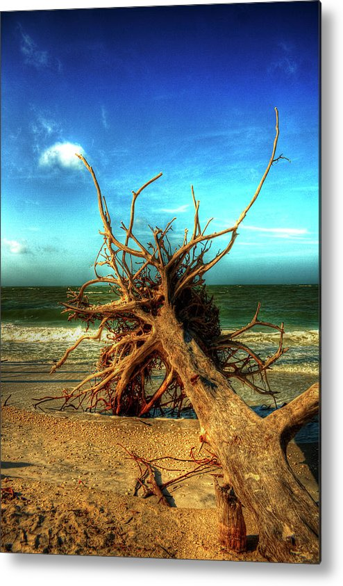 Driftwood Metal Print featuring the photograph The Fallen by Virginia Fred