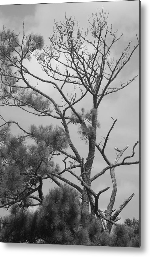 Trees Metal Print featuring the photograph Trees by Tina McKay-Brown