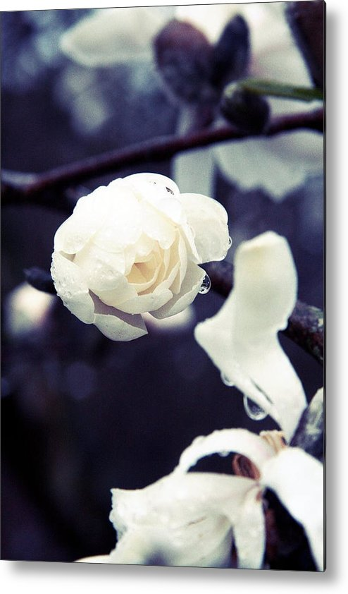 Rain Metal Print featuring the photograph White Rain by Amanda Wimsatt