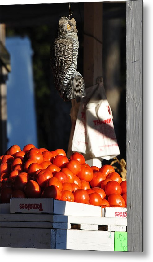 Still Life Metal Print featuring the photograph Who's Tomatoes by Jan Amiss Photography