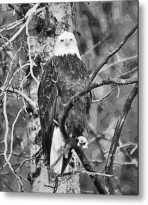 Eagle Metal Print featuring the painting Bald Eagle In Black And White by Clarence Alford