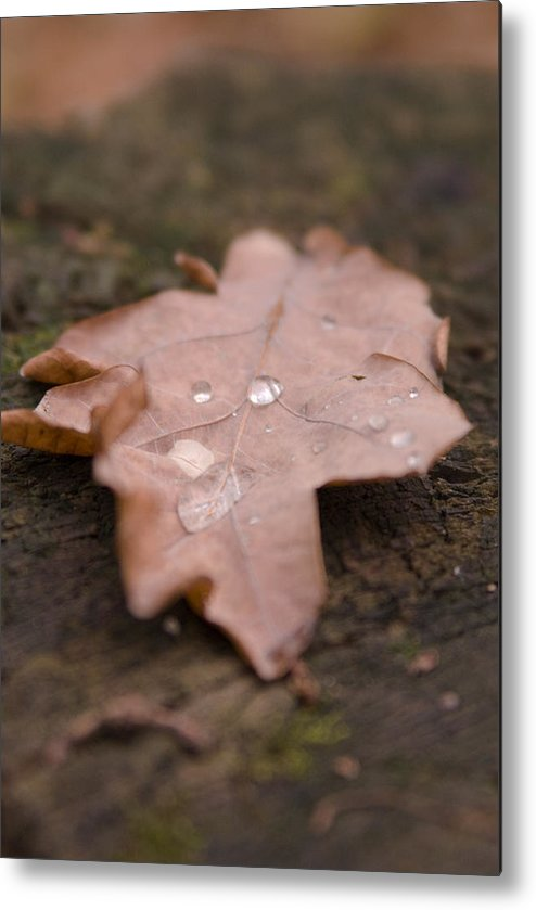 Leafs Metal Print featuring the photograph Dead Leaf by Mihail Antonio Andrei