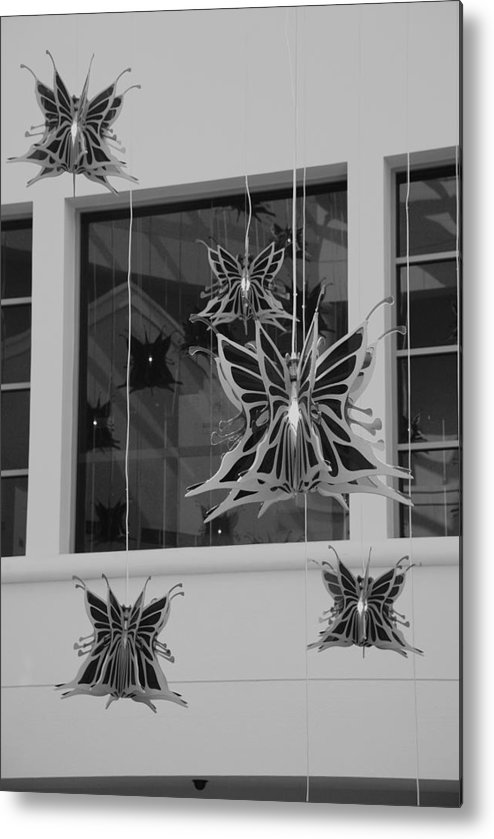 Black And White Metal Print featuring the photograph Hanging Butterflies by Rob Hans