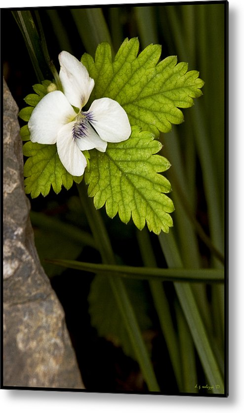 Flora Metal Print featuring the photograph A Gentle Demise by Daniel G Walczyk