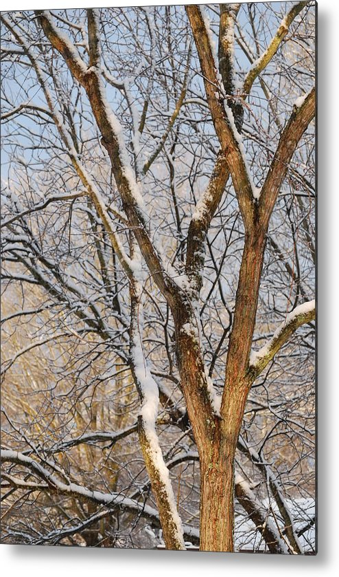 Trees. Branches Metal Print featuring the photograph Bare Branches by Trudi Southerland