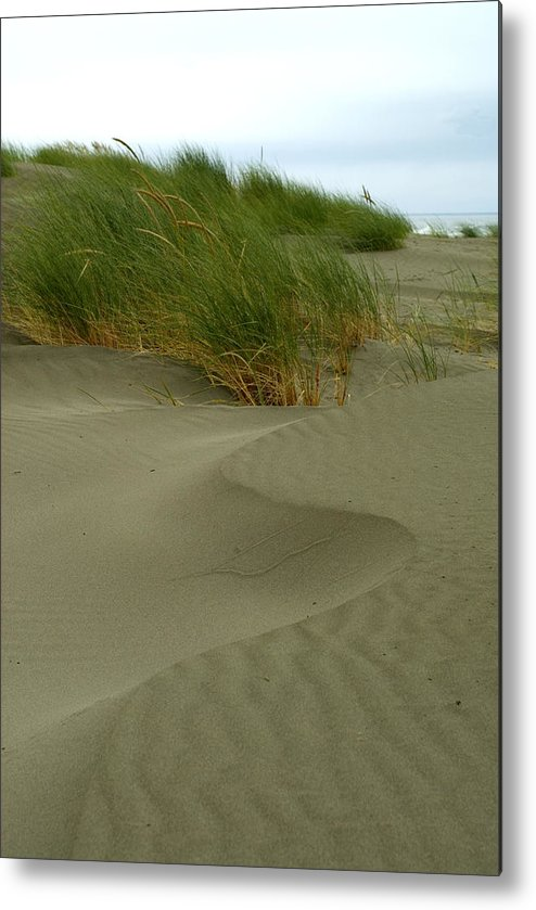 Beach Metal Print featuring the photograph Beach Grass by Jessica Wakefield