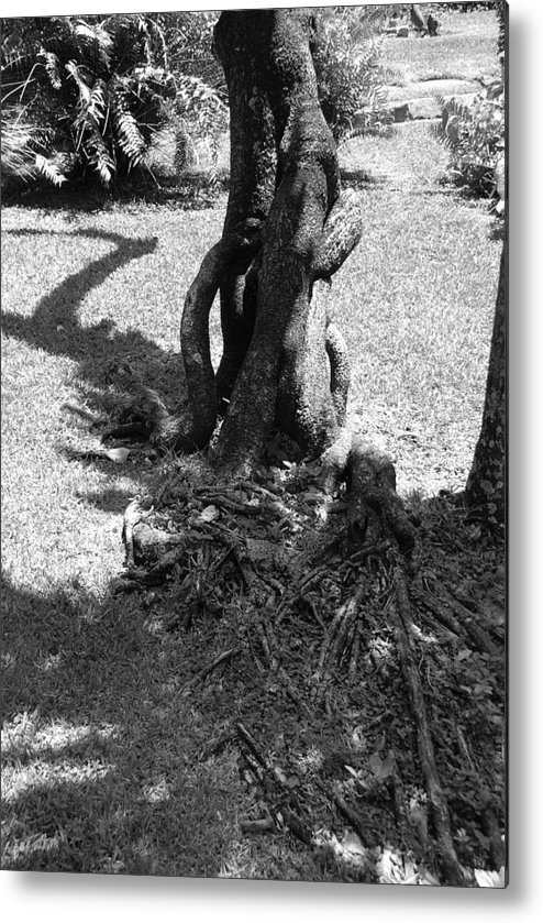 Black And White Metal Print featuring the photograph Black And White Roots by Rob Hans