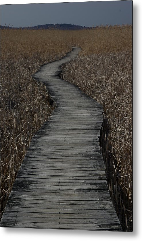 Landscape Metal Print featuring the photograph Boardwalk by Eric Workman