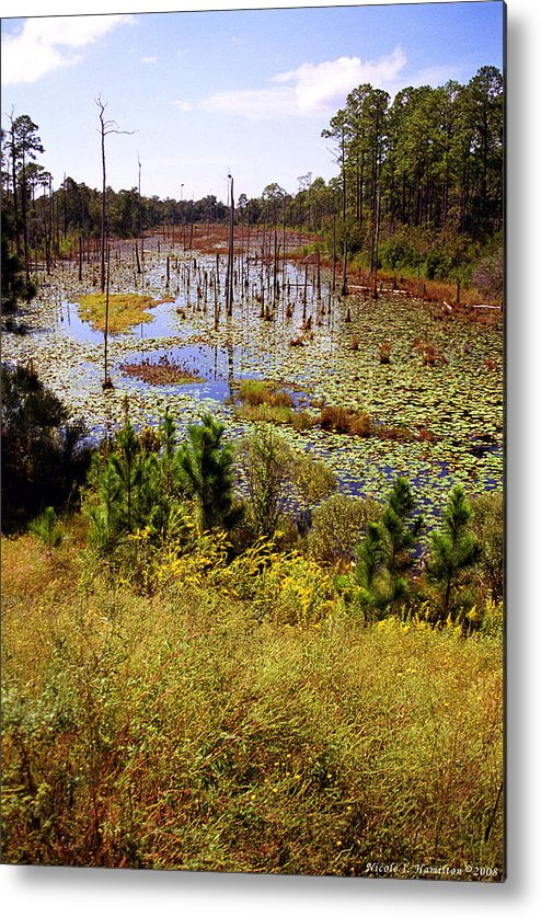 Wetland Metal Print featuring the photograph Florida Wetland by Nicole I Hamilton