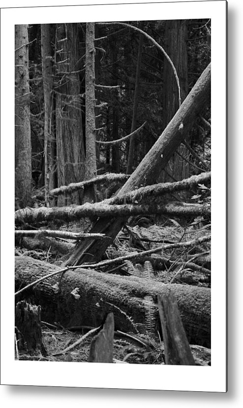 Black Metal Print featuring the photograph Natural Forest by J D Banks