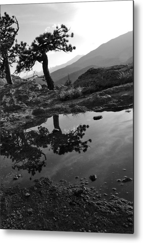 Tree Metal Print featuring the photograph Pale Reflections by Matthew Fredricey