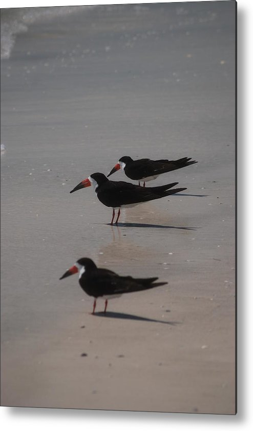 Landscape Metal Print featuring the photograph Sea Birds by Lisa Gabrius