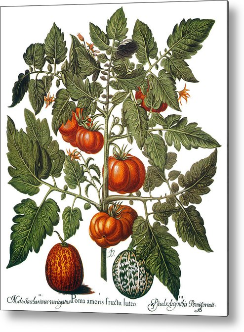 1613 Metal Print featuring the photograph Tomato & Watermelon 1613 by Granger