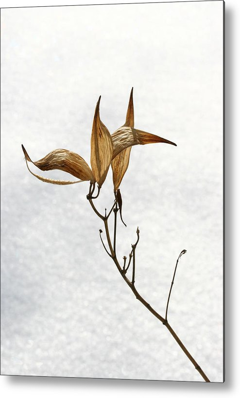 Flower Metal Print featuring the photograph After Setting Seed by Steve Augustin