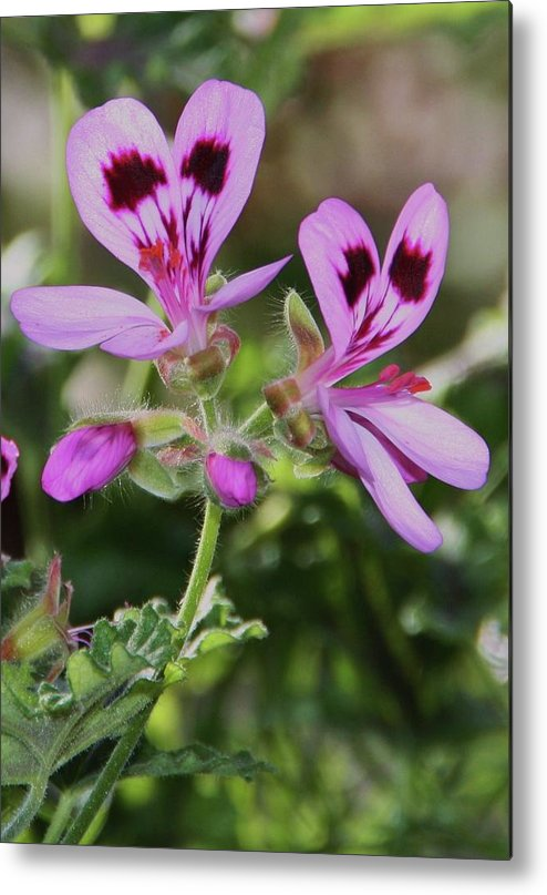 Little Flowers Metal Print featuring the photograph Little Flowers by Martina Fagan