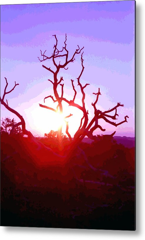 Desert Metal Print featuring the photograph Sunset Through Silhouetted Tree In Desert 2 by Steve Ohlsen