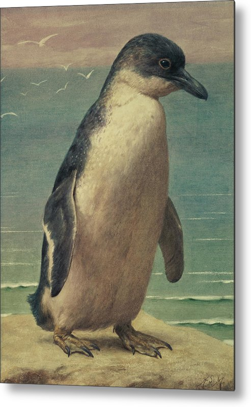 Study Metal Print featuring the painting Study Of A Penguin by Henry Stacey Marks