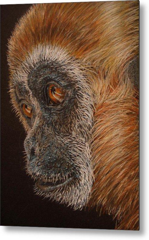 Animals Metal Print featuring the drawing Gibbon by Karen Ilari
