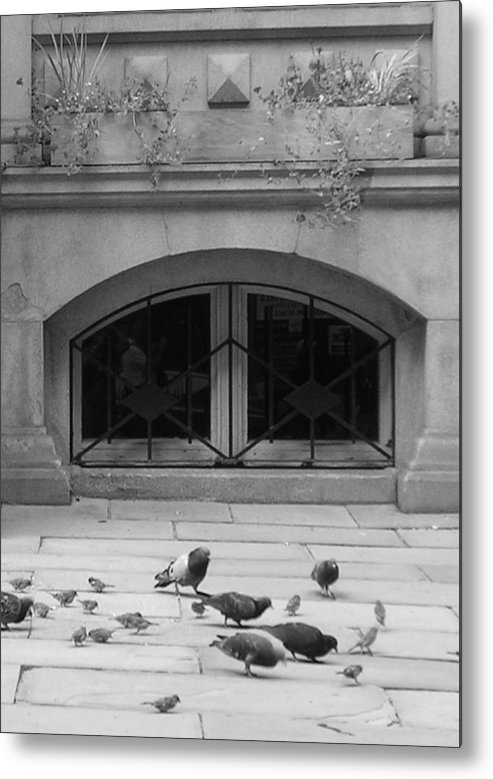 Pigeons Metal Print featuring the photograph Boston Scene by Nancy Ferrier