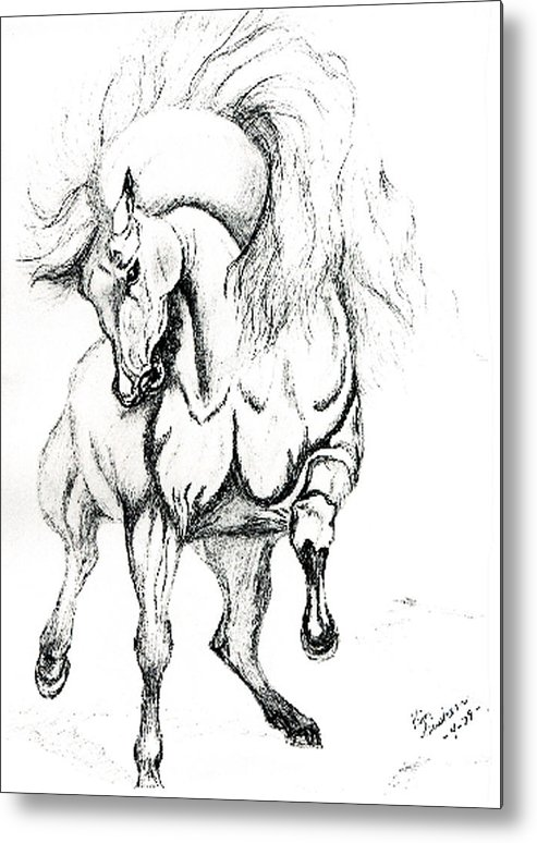 Horses Metal Print featuring the drawing Noble Stallion by Kim Souza