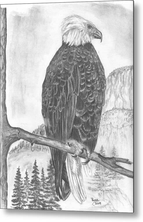 American Bald Eagle Metal Print featuring the drawing American Bald Eagle by Russ Smith