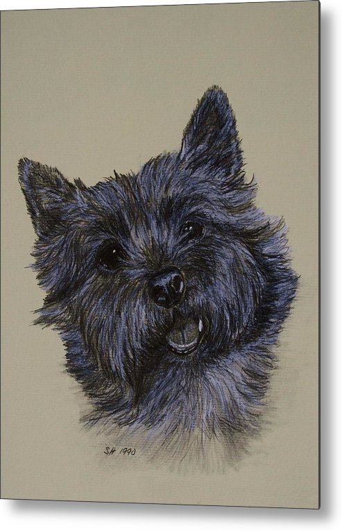 Cairn Metal Print featuring the drawing Cairn Terrier by Susan Herber