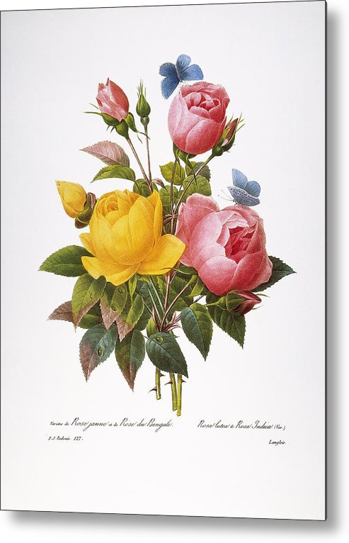 1833 Metal Print featuring the photograph Redoute: Roses, 1833 by Granger