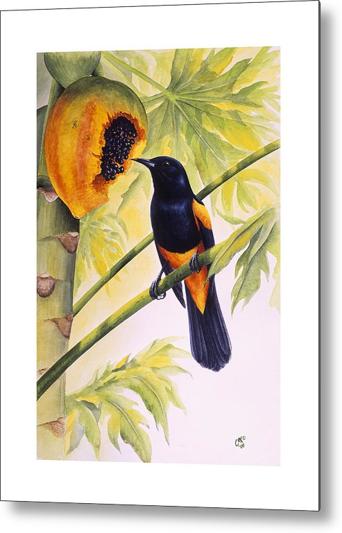 Chris Cox Metal Print featuring the painting St. Lucia Oriole And Papaya by Christopher Cox