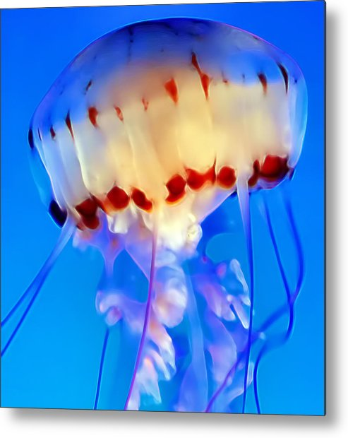 Jellyfish Metal Print featuring the photograph Jellyfish 3 by Dawn Eshelman