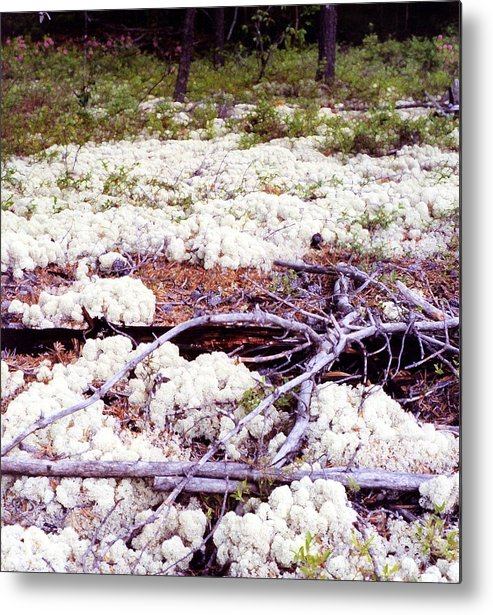 Boreal Foest Metal Print featuring the digital art Moss And Dead Branches 2 Ae2 by Lyle Crump