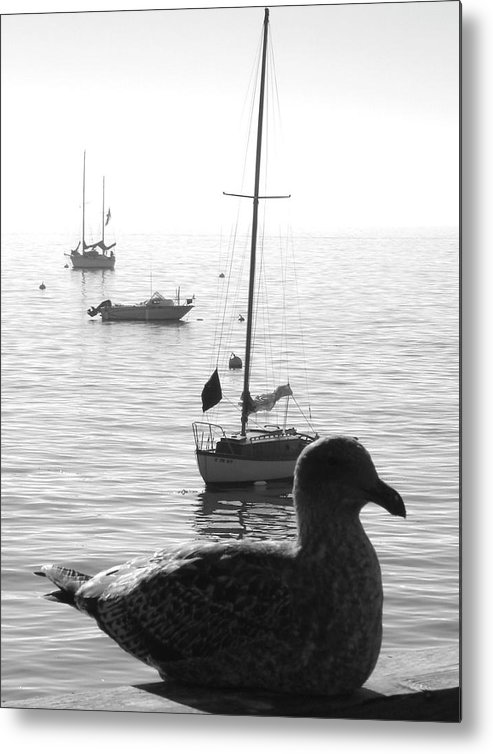 Pacific Gull Metal Print featuring the photograph Pacific Gull by Linda ONeill