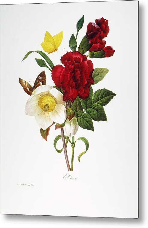 1833 Metal Print featuring the photograph Redoute: Hellebore, 1833 by Granger