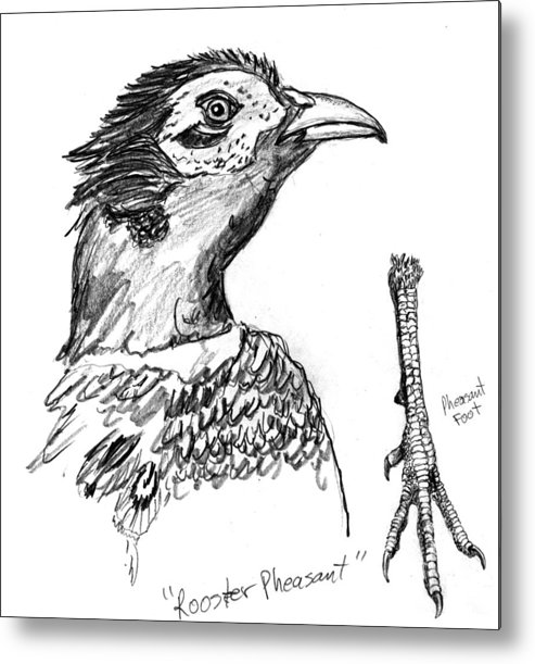 Iowa Metal Print featuring the drawing Head And Foot Of A Chinese Ringneck Rooster Pheasant by Kevin Callahan