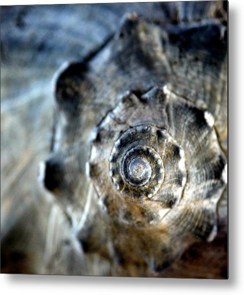 Seashells Metal Print featuring the photograph Remember The Sea With Me by Karen Wiles