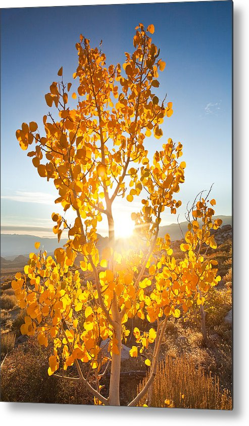 Eastern Sierra Metal Print featuring the photograph Aspen Sun by Nolan Nitschke