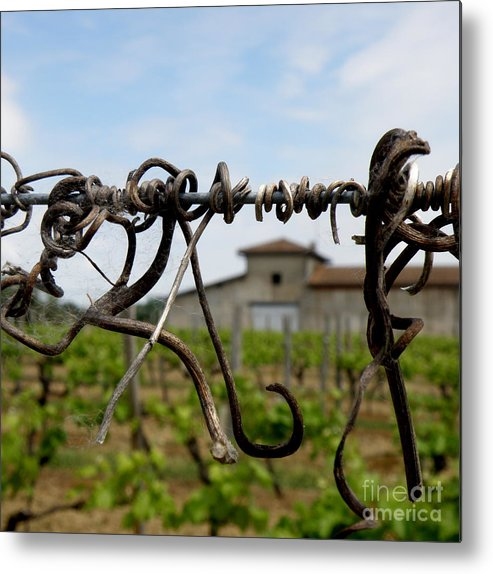 Vineyard Metal Print featuring the photograph Old And New by Lainie Wrightson