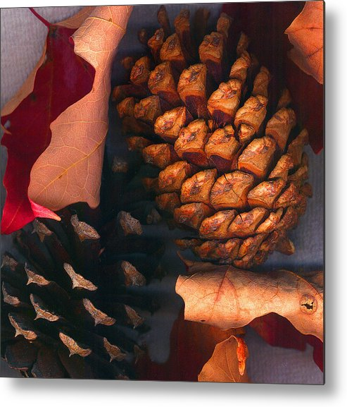 Pine Cones Metal Print featuring the photograph Pine Cones And Leaves by Nancy Mueller