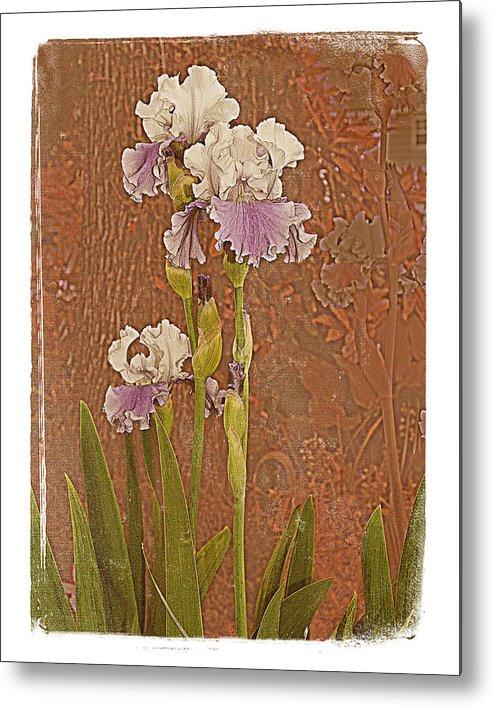 Flowers Garden Beautiful Old Iris Metal Print featuring the photograph Iris 1 by Inesa Kayuta