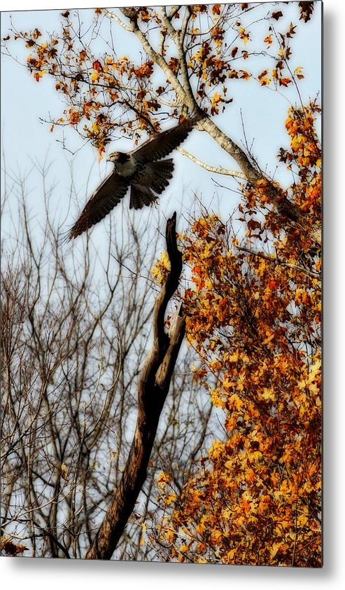 Flight Metal Print featuring the photograph Autumn Flight by Alan Skonieczny