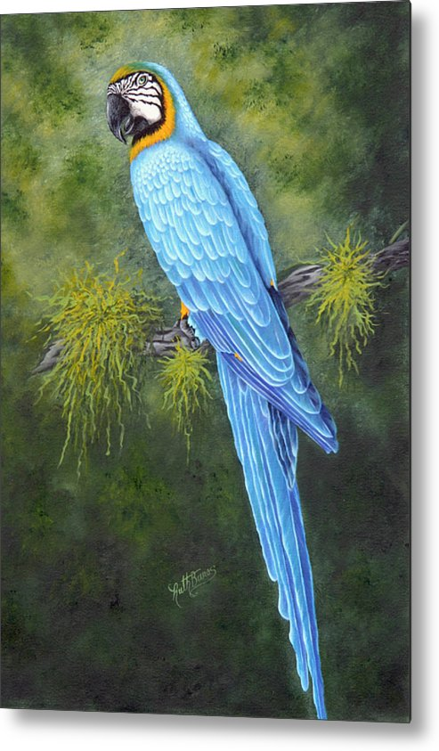 Bird Metal Print featuring the painting Buddy by Ruth Bares