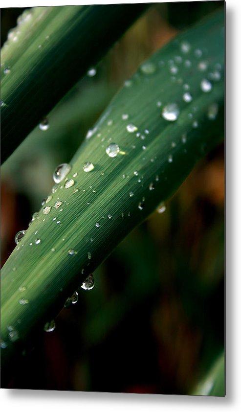 Photograph Metal Print featuring the photograph Summer Rain by Alexandra Harrell