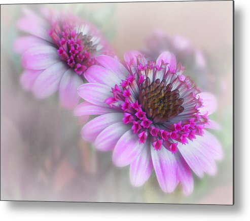 Flower Metal Print featuring the photograph Purple Blooms by David and Carol Kelly