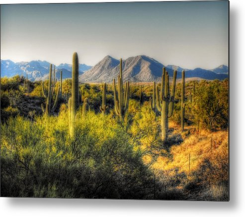 Arizona Metal Print featuring the photograph Sonoran Desert by Saija Lehtonen
