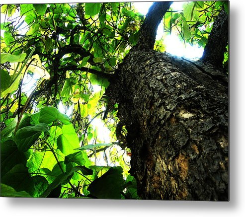 Trees Metal Print featuring the painting Always Looking Up by Tim Tanis