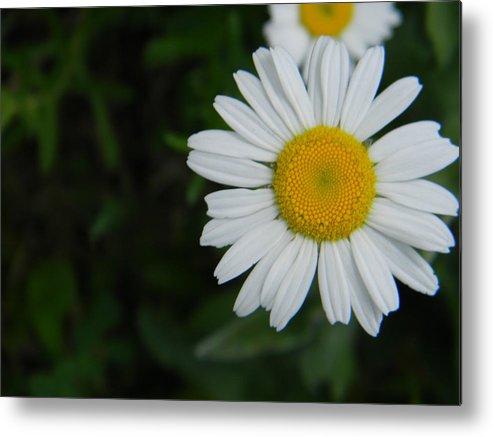 Flowers Metal Print featuring the photograph Flower by Adam Hernandez