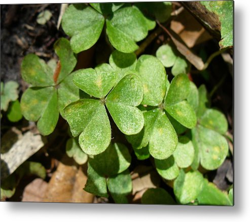 Nature Metal Print featuring the photograph A Little Luck by Stephanie Richards